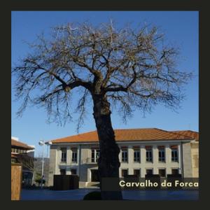 Carvalho da Forca
